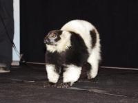 Affiliate Summit West 2012 Sea World Lemur